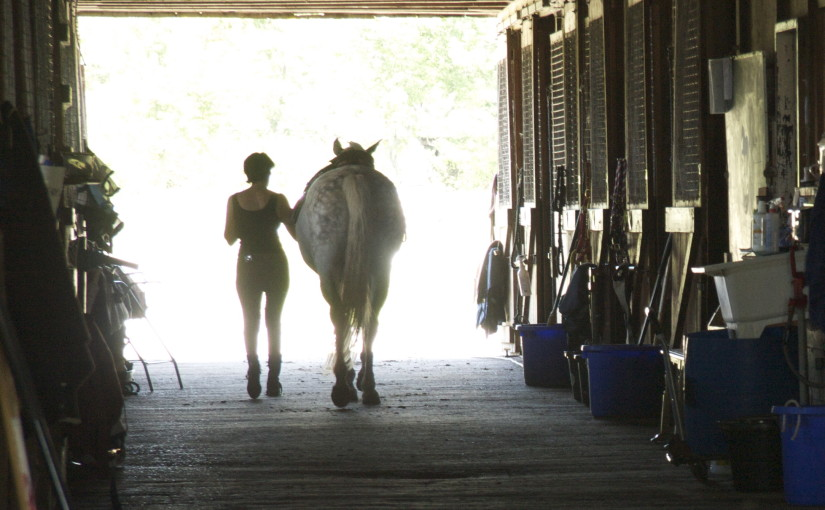 Trickster, Dancer, Healer: Life Lessons From My Horse